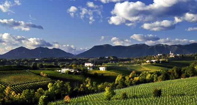 Prosecco Vineyards in Conegliano