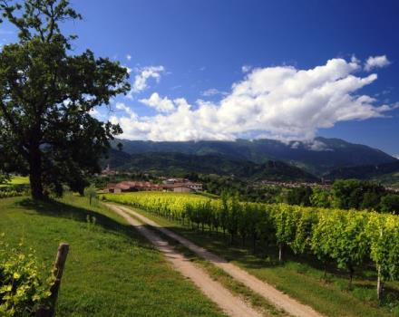 Vineyards in Vittorio Veneto