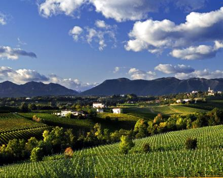 the vineyards around Conegliano offer beautiful paths for running and walking